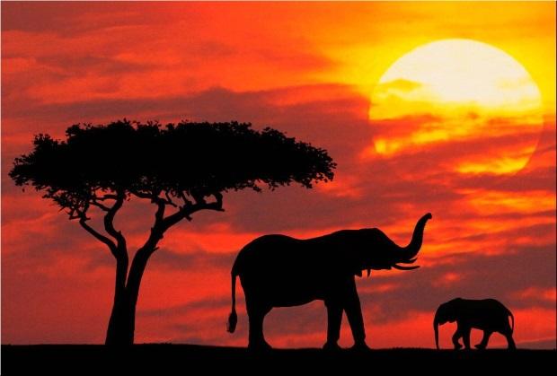 Safari Honeymoon